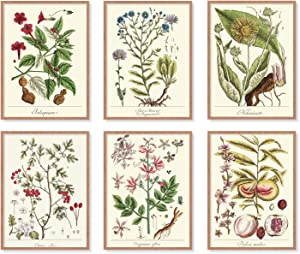YUMKNOW Farmhouse Vintage Botanical Wall Decor - Unframed Set of 6, 8x10, Boho Cottagecore Plant Leaves Room Decor for Bathroom, Bedroom Art Posters Prints, Aesthetic Flower Pictures Office Kitchen