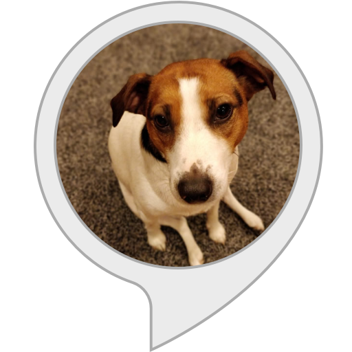 (Jack Russell Terrier Facts)