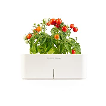 Click Grow Smartpot Mini Tomato Indoor Grow Kit Amazoncouk