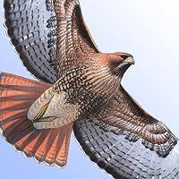 Sibley Birds of North America