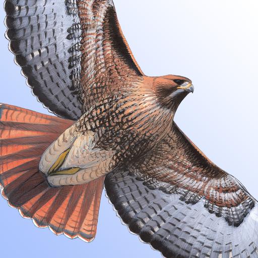 Sibley Birds of North America (Best Bird Guide App)
