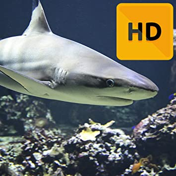 Amazoncom Shark Wallpaper Hd Appstore For Android