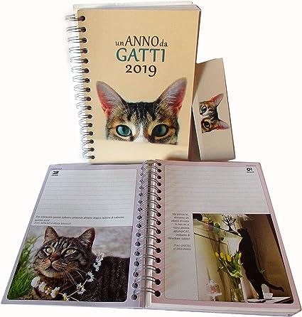 Agenda Gran A5 con Espiral Un año de gatos 2019: Amazon.es: Oficina y papelería