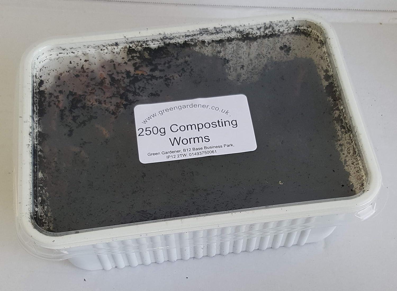 Green Gardener Wormery//Composting Worms 250