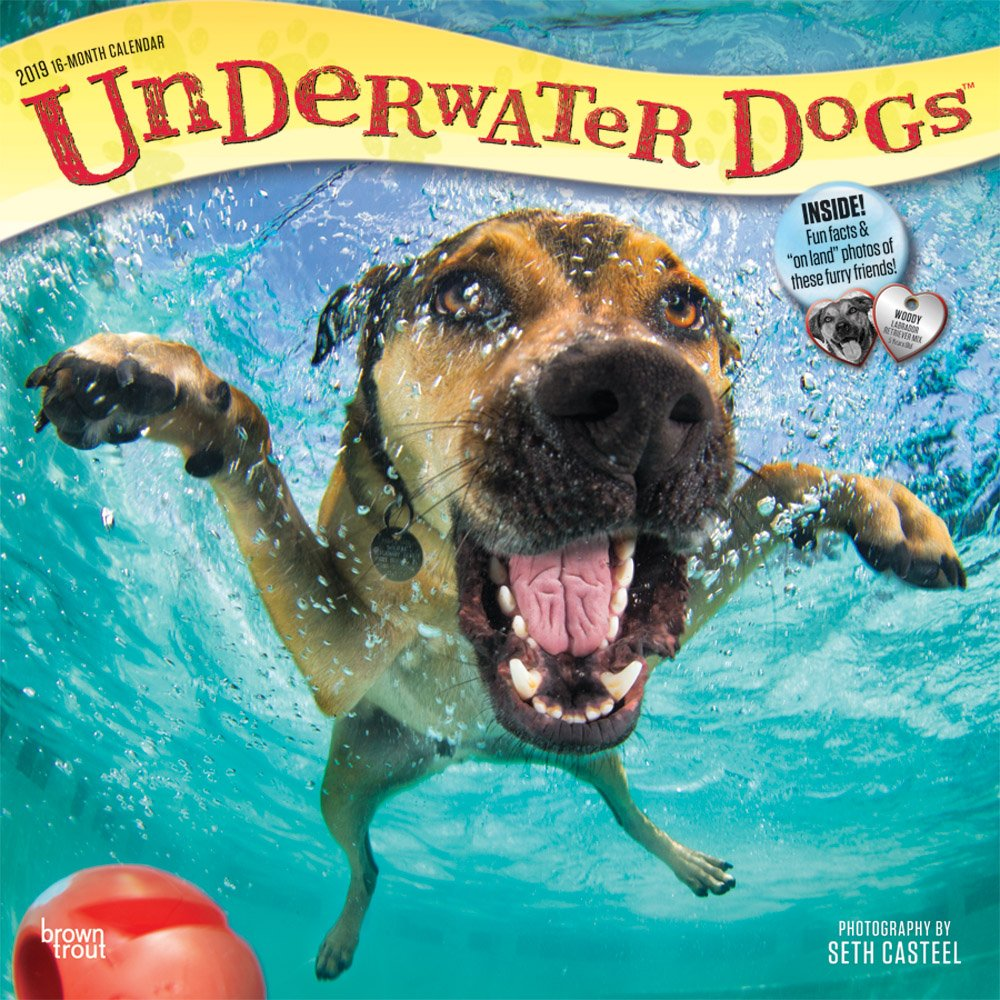 Underwater Dogs 2019 12 x 12 Inch Monthly Square Wall Calendar, Pet Humor Puppy (Multilingual Edition) (Multilingual) Calendar – Wall Calendar, June 1, 2018 Inc. BrownTrout Publishers 1465075313 General Reference