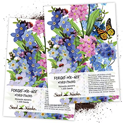 "Seed Needs, Forget-Me-Not""Mixed Colors"" (Myosotis alpestris) Twin Pack of 1,000 Seeds Each: Toys & Games"