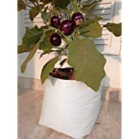 Rochfern Grow Bags (Pack of 10) Size-35x20x20cm, UV Treated Portable. Perfect for Terrace, Balcony, Kitchen Vegetables Garden, Flats
