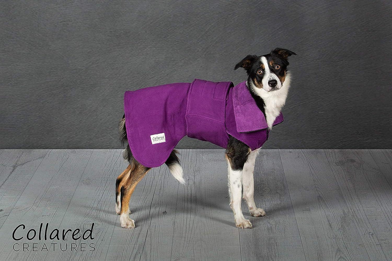 Medium Collared Creatures Dog Drying Coat, TowlingMicrofiber Lined Fleece Jacket Purple (available sizes XS, S, M, L, XL, XXL) XLarge