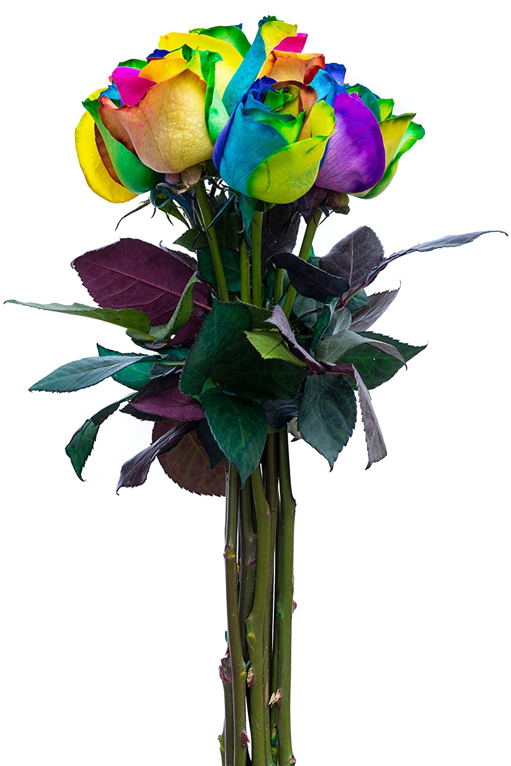 Amazon.com : Flower Explosion Fresh Rainbow Roses Bouquet by 12 ...