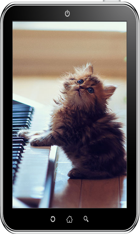 Amazon Com Cute Cat Wallpaper Hd Appstore For Android