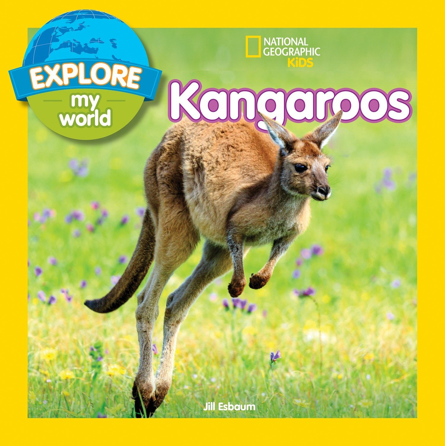 Explore My World  Kangaroos