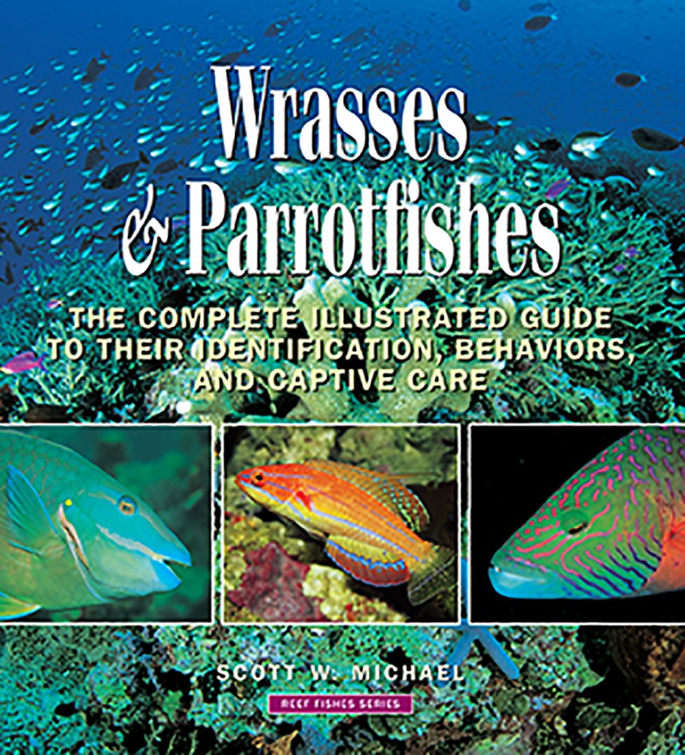 Wrasses & Parrotfishes (Reef Fishes)