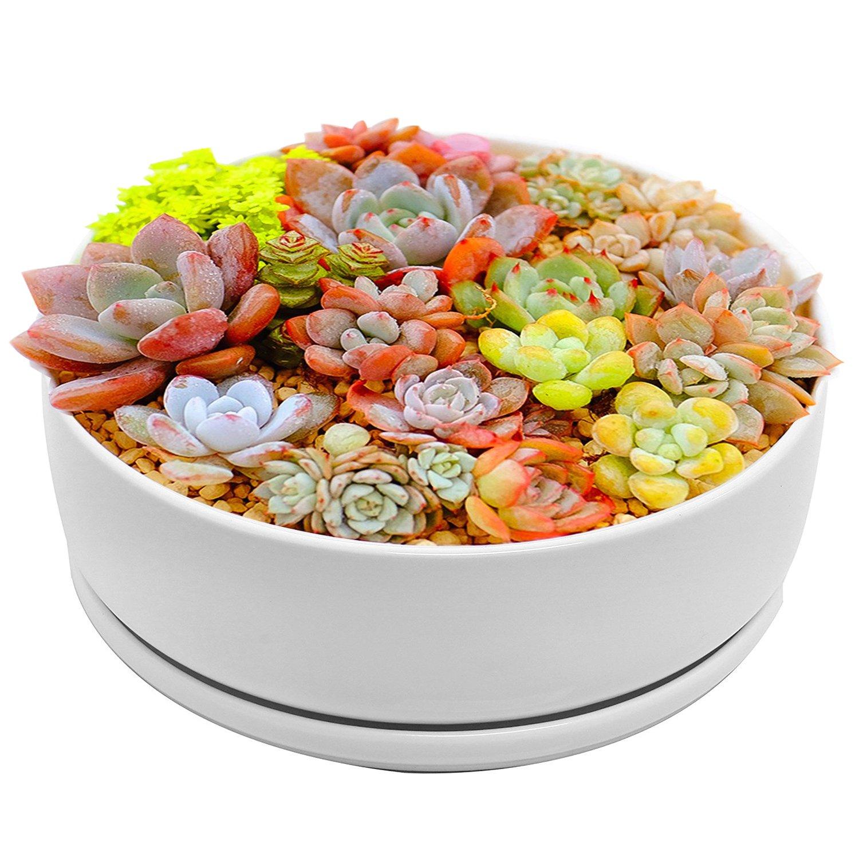White Ceramic Round Flower Pot, 8 inch Modern Round White Ceramic Planter/Pot for succulent/cactus plants with ceramic tray