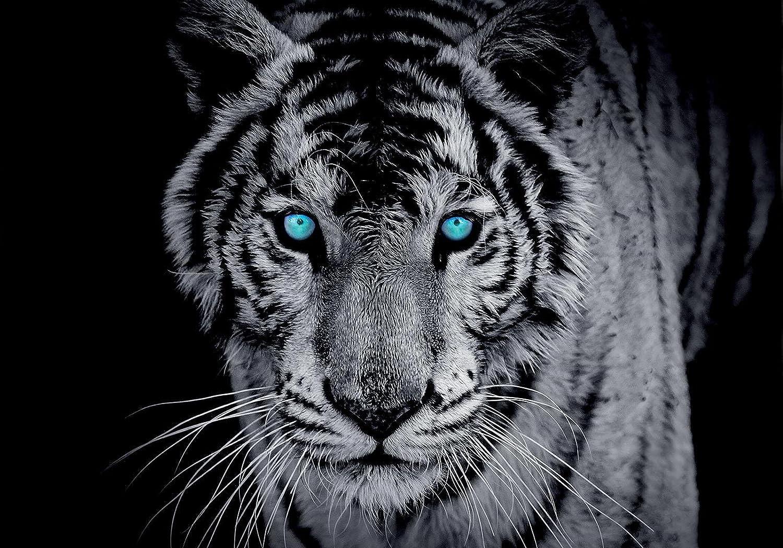 FORWALL AMF10202_P2 - Papel pintado fotográfico, diseño de tigre, color azul y gris, Papel Blue back., Negro y blanco, azul., P2 (254cm. x 92cm.)