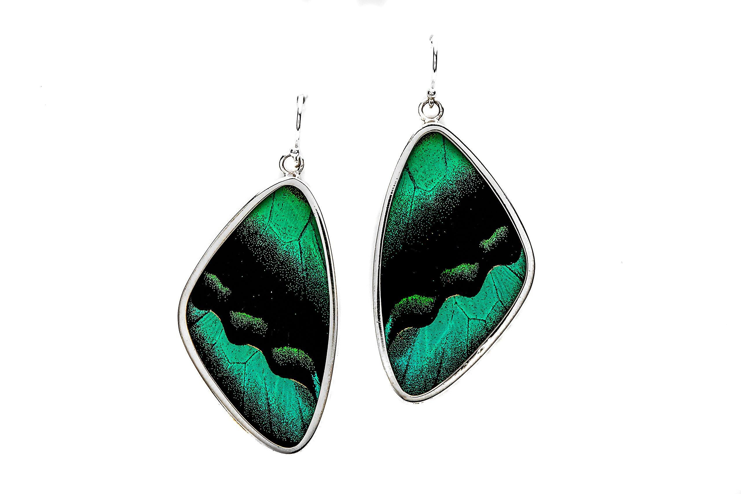 Real Butterfly Wing Earrings in Sterling Silver - Style #7