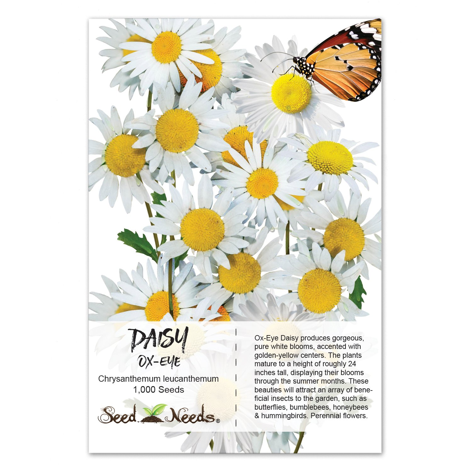 Amazon Package Of 1 000 Seeds Ox Eye Daisy Chrysanthemum