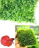 "Corisrx Water Plants Taiwan Moss (Live Aquarium Plant) 3""x3"" Stainless Steel Wire Mesh for Freshwater Fish Tank"