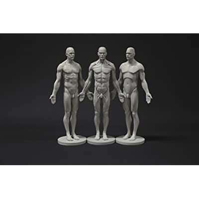 Male Anatomy Figure Collection: Planar, Ecorche and Skin - Anatomical Reference for Artists: Arts, Crafts & Sewing