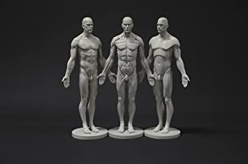Male Anatomy Figure Collection: Planar, Ecorche and Skin - Anatomical  Reference for Artists
