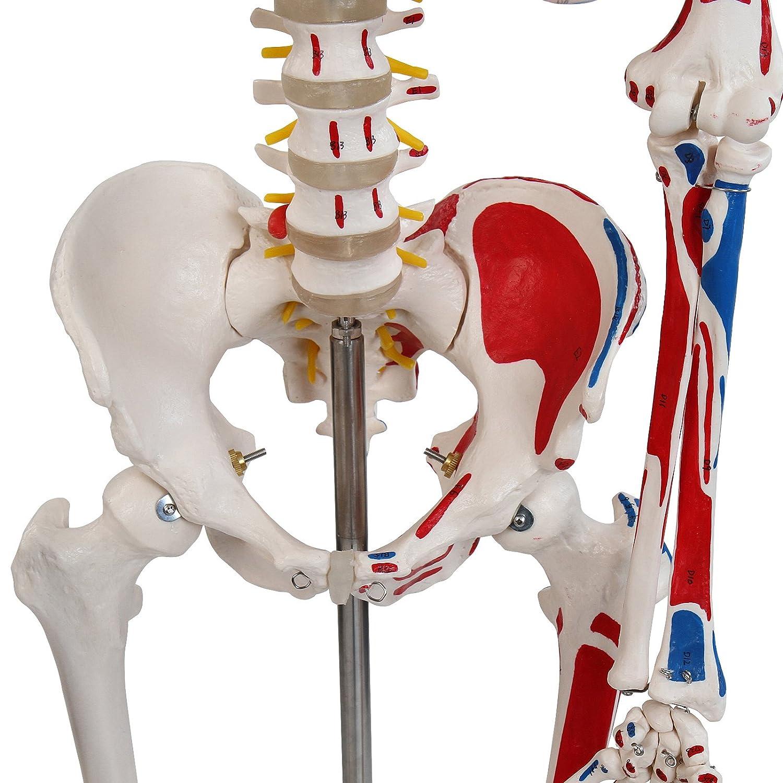 Ziemlich Lebenslauf Skelett Bilder - Beispiel Business Lebenslauf ...