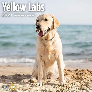 2021 Yellow Labs Wall Calendar by Bright Day, 12 x 12 Inch, Cute Dog Puppy Labrador