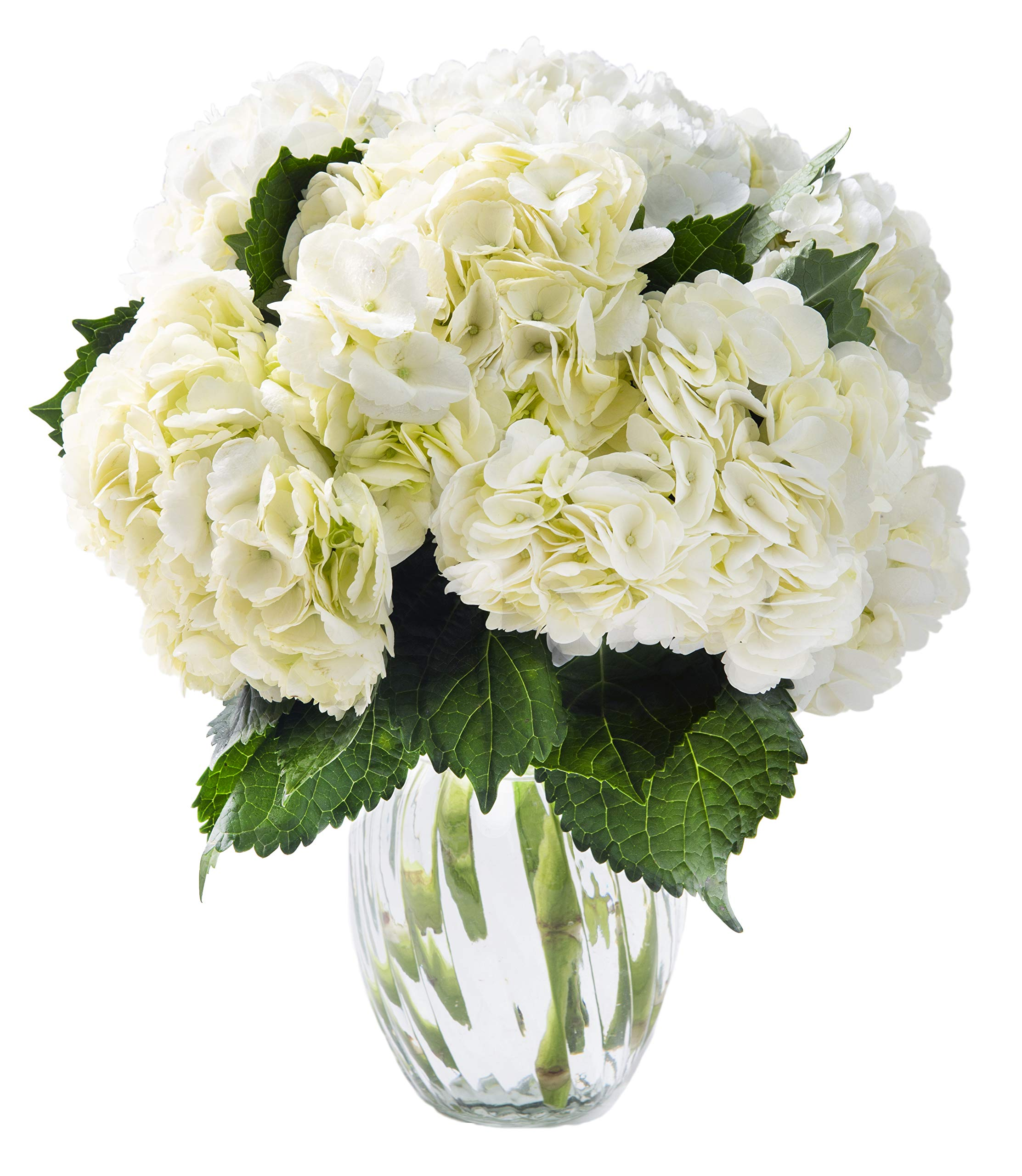 KaBloom Summer Beauty Bouquet of 6 White Hydrangeas with Vase by KaBloom