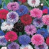Centaurea cyanus - Kornblumen-Mix - 5 Farben - 250 Samen