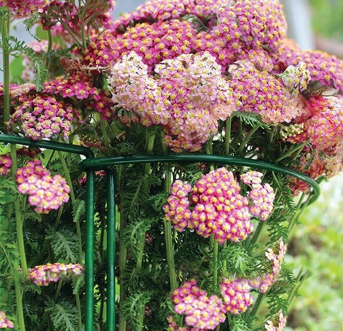 Gardman 07436 - Soporte para Plantas, Color: Amazon.es: Jardín