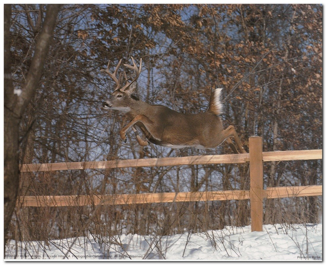 amazon com whitetail deer jumping fence wildlife animal wall
