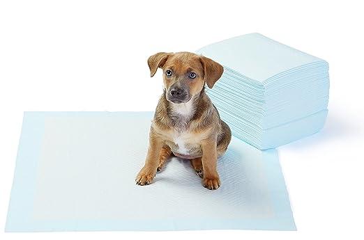 192 opinioni per AmazonBasics- Tappetini igienici assorbenti per animali domestici, misura
