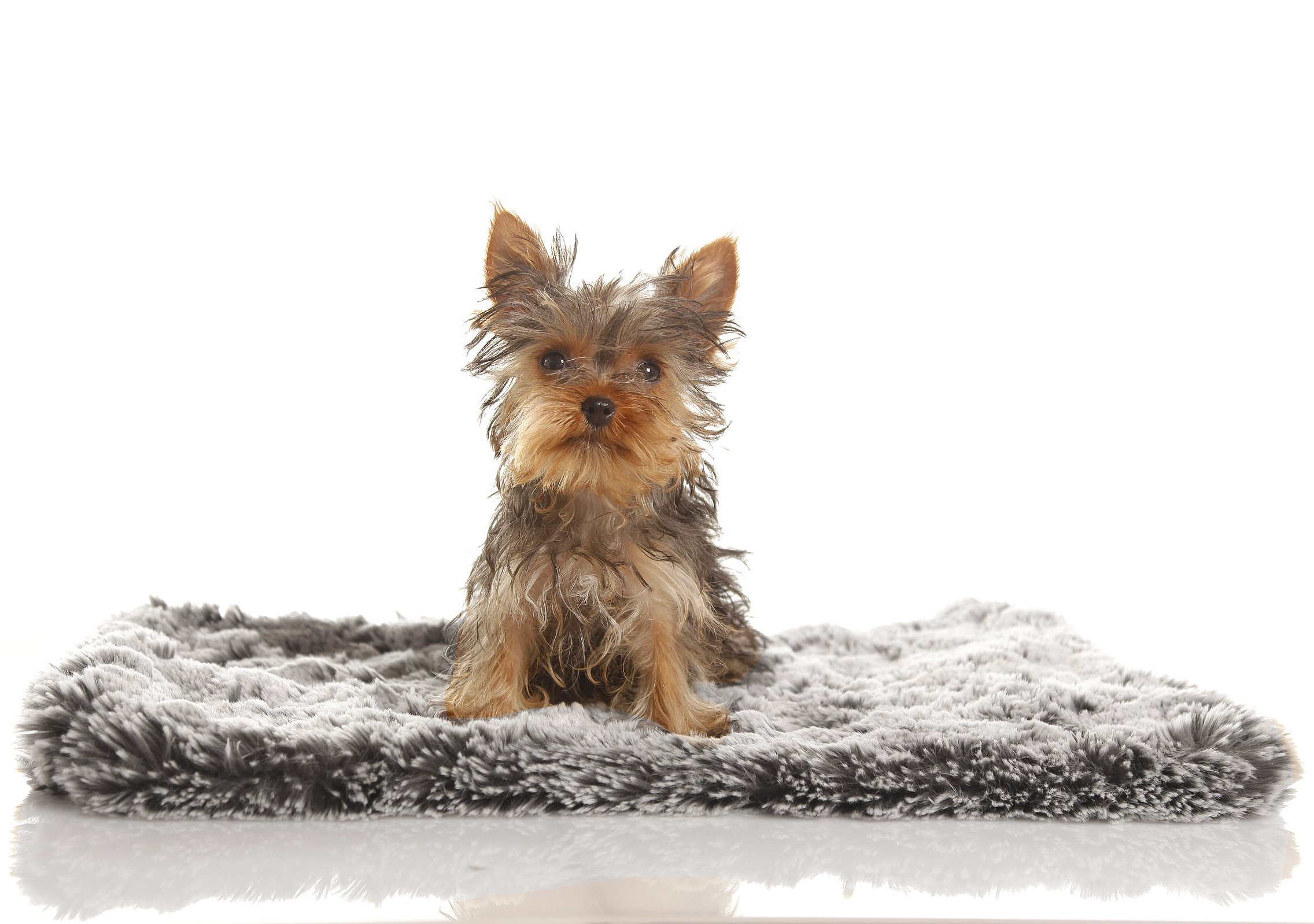 Faux Fur Pet Blanket
