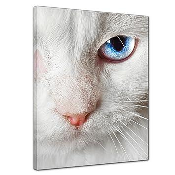 """Bilderdepot24 Cuadros en Lienzo""""Gato blanco con dos colores de ojos"""" 40x50 cm -"""
