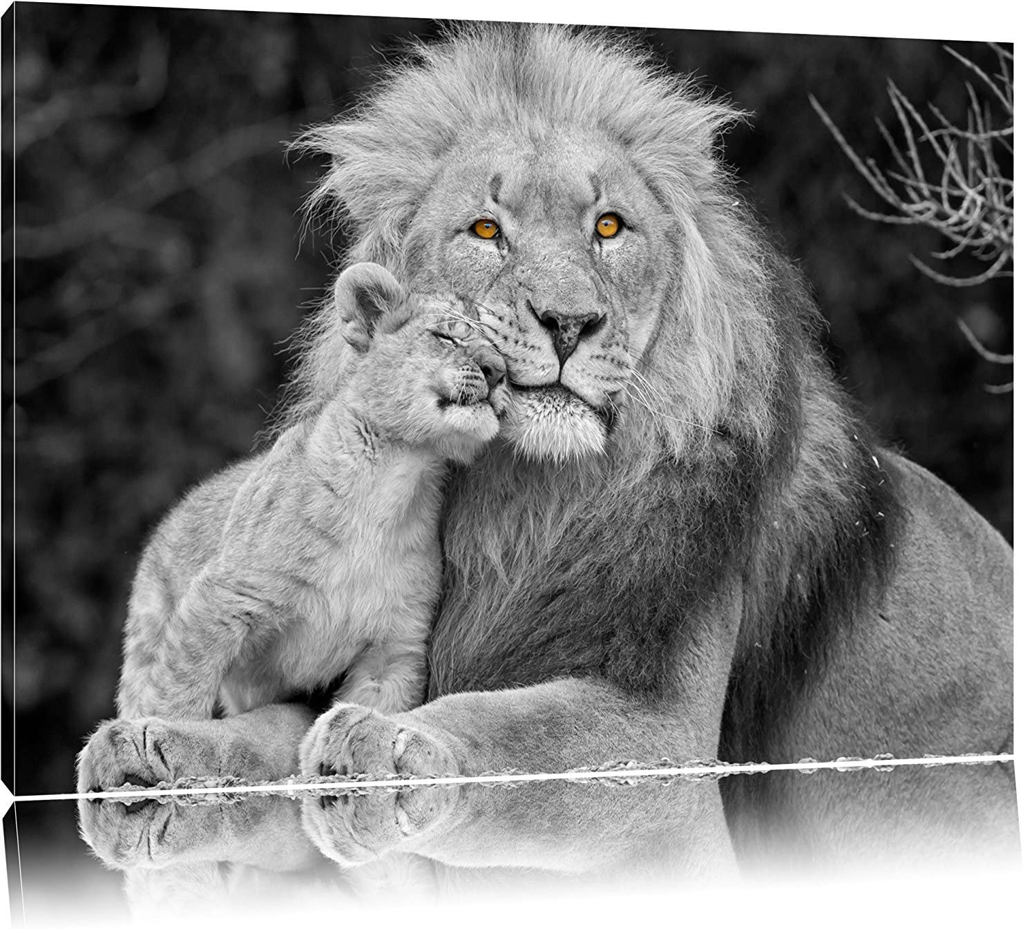 Amazon.com: Theobald Bloor Beautiful Lion with Cub Black/White On Canvas,  Canvas Prints Wall Art for Home DéCor, 16