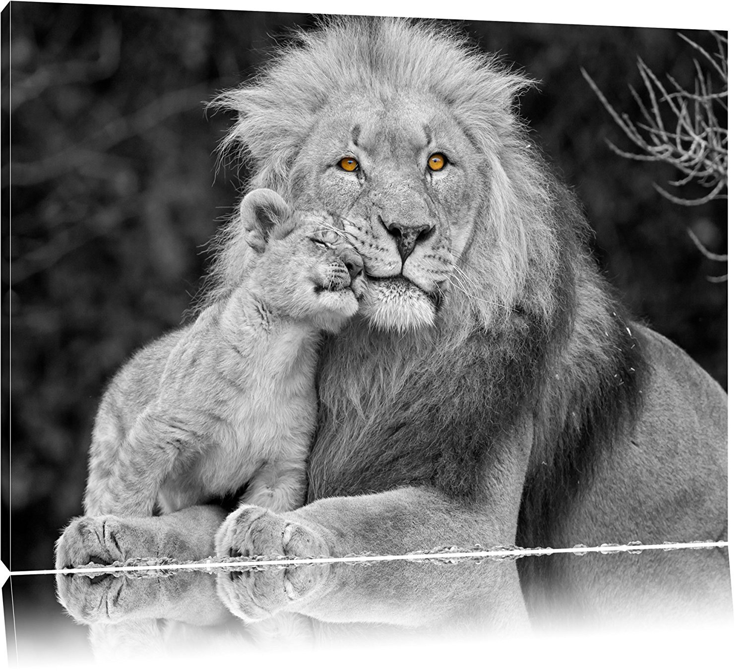 Amazon com beautiful lion with cub black white on canvas canvas prints wall art for home décor 16x1240x30cm posters prints