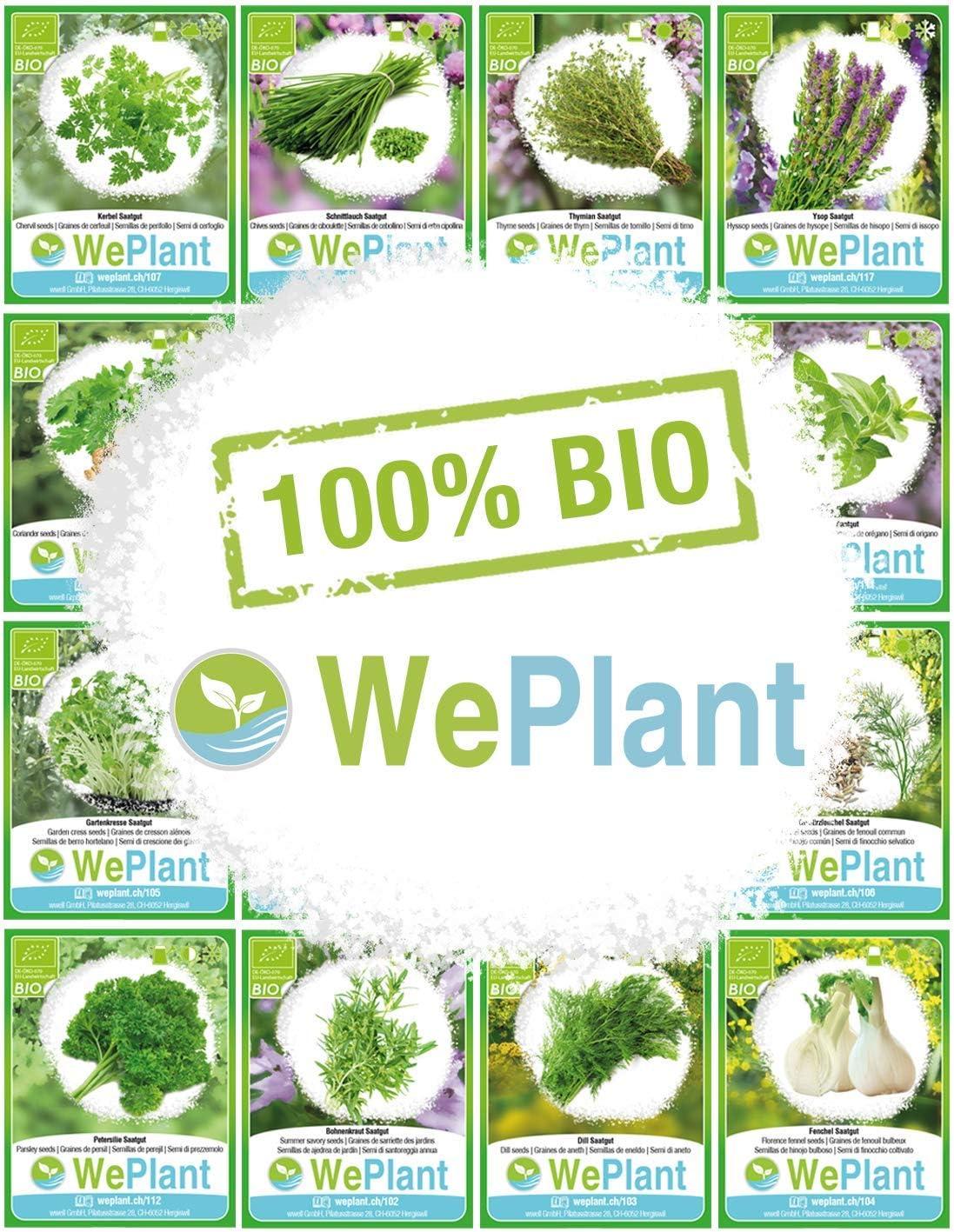 Semillas ecol/ógicas de plantas naturales//Interior /& Exterior BIO//ORGANICO Albahaca /& Hisopo