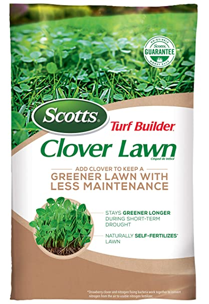 e5fb3c4ac71 Amazon.com : Scotts Turf Builder Clover Lawn : Garden & Outdoor