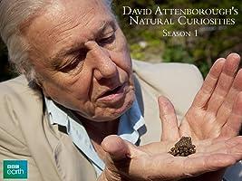 David Attenborough's Natural Curiosities, Season 1