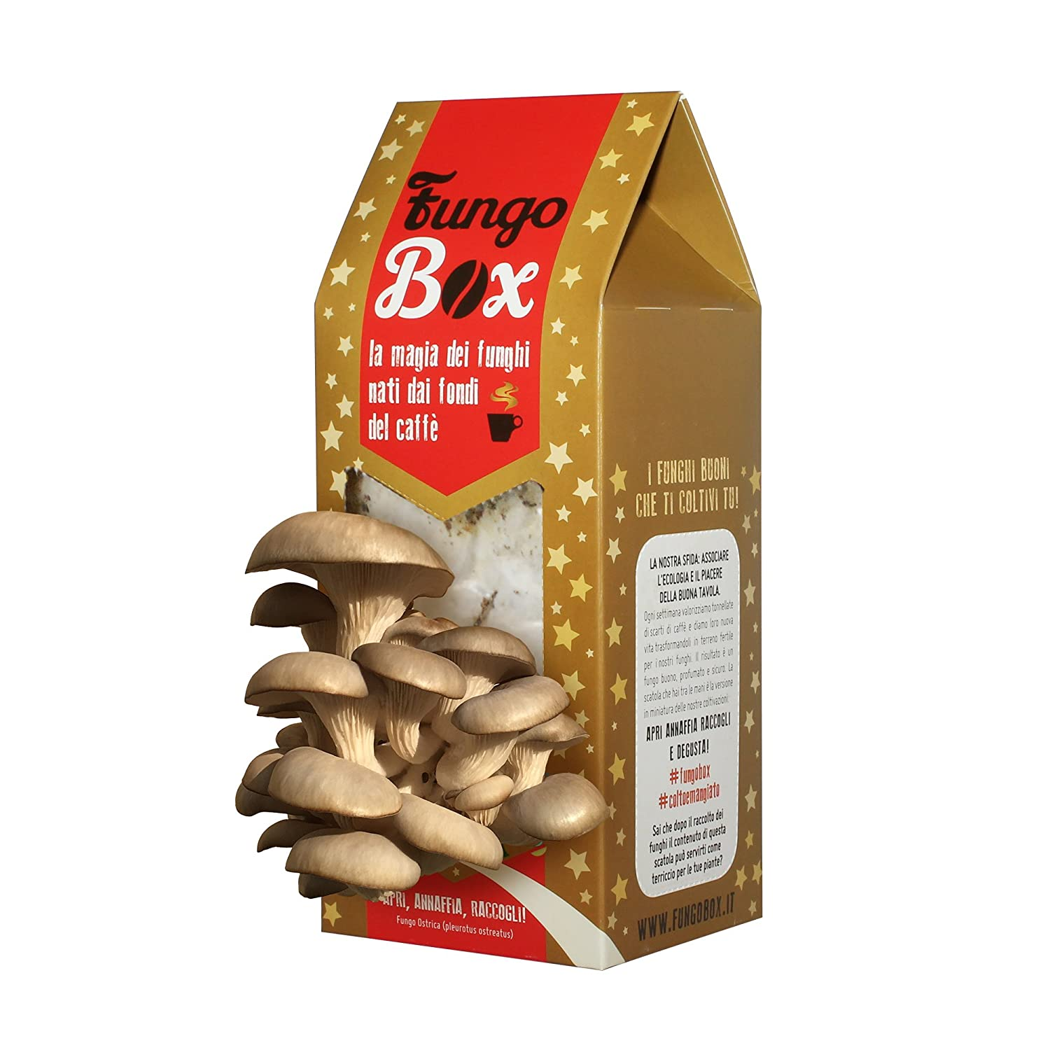 Fungo Box Christmas: Kit for Growing Oyster Mushrooms at Home (Edible and Good), from Coffee Espresso Grounds Upcycle Italia