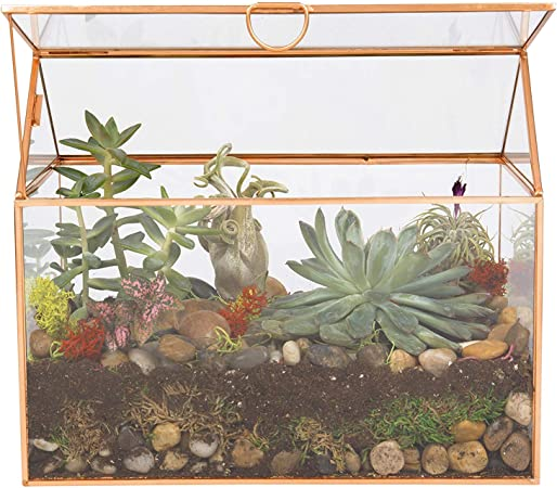 Amazon Com Deco Glass Terrarium Succulent Air Plant Large 9 8