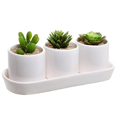 White Ceramic Contemporary Design Succulent Plant Holder Display Set w/ 3 Pots & 1 Water Draining Tray: Garden & Outdoor