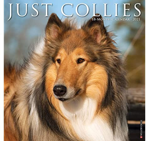 Whelping Calendar 2021 Just Collies 2021 Wall Calendar (Dog Breed Calendar): Willow Creek