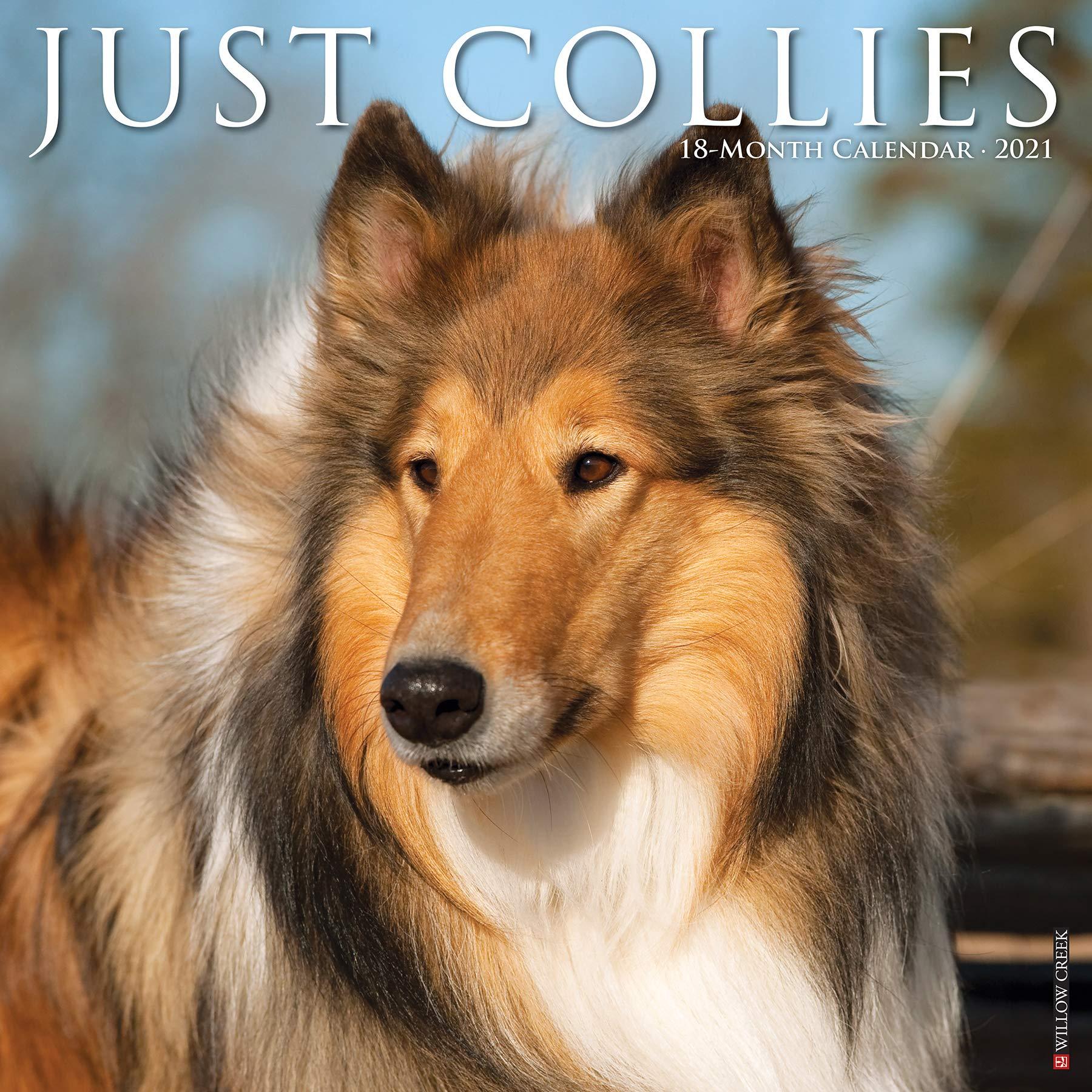 Just Collies 2021 Wall Calendar (Dog Breed Calendar): Willow Creek