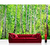 """Photo wallpaper - forest trees birch nature - 157.4""""W by 110.2""""H (400x280cm) - Non-woven PREMIUM PLUS - BIRCH FOREST - Wall Decor Photo Wall Mural Door Wall Paper Posters & Prints"""