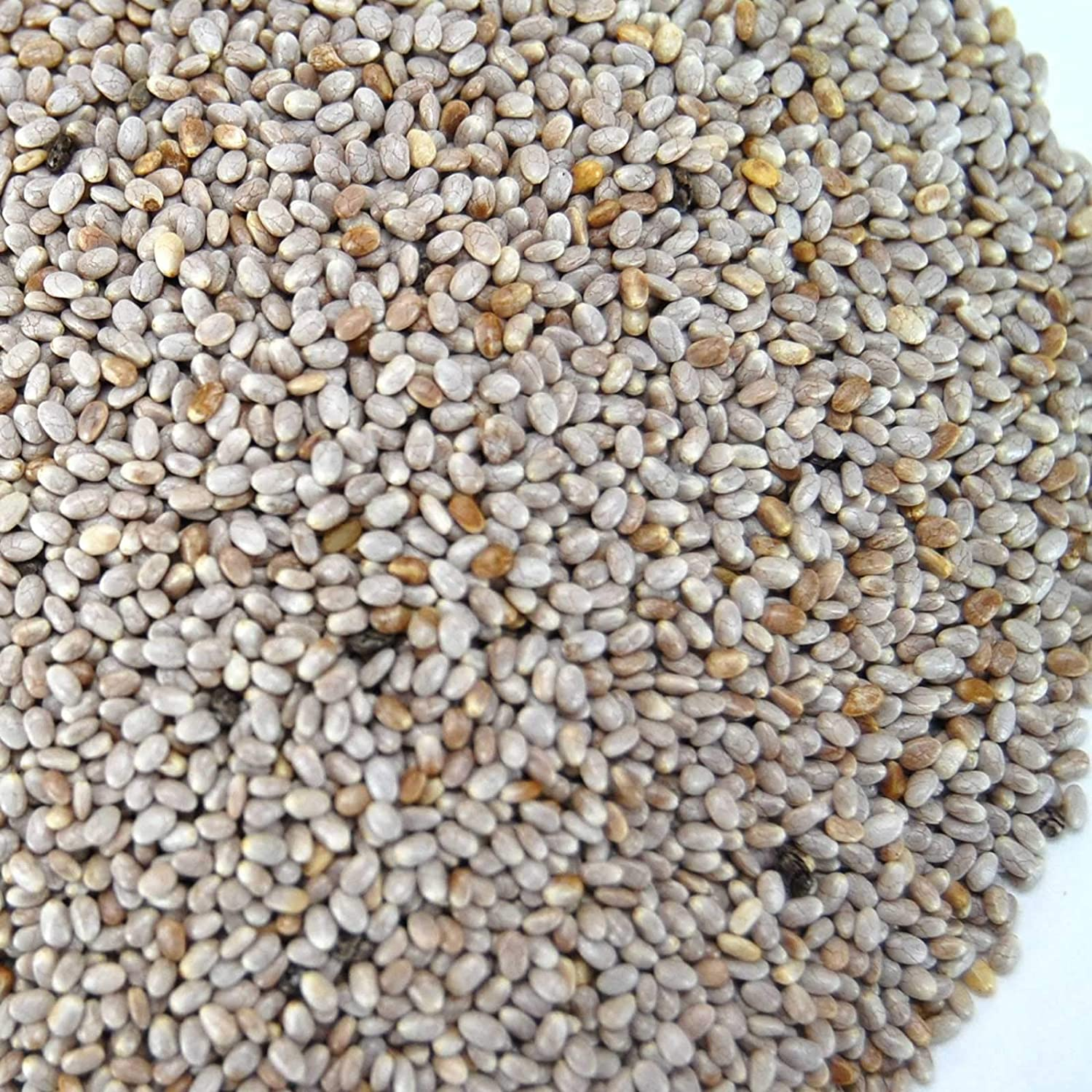 Organic White Chia Seeds- 3 g Packet ~2000 Seeds - Sprouting Seeds for Growing Sprouts, Chia Pet Refills, Food Storage, Sprout Salad
