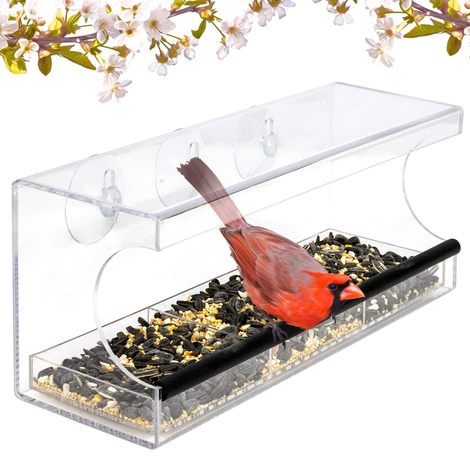 Jade Active Window Bird Feeder with Strong Suction Cups - Easy Outside Installation - Squirrel Proof Bird Feeder fits Kitchen and Living Room Window Flawlessly
