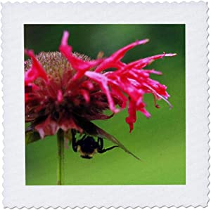 3dRose Macro photograph of pink bee balm with a carpenter bee taking. - Quilt Squares (qs_337302_7)