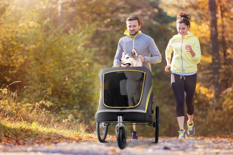 Ein Hundebuggy eignet sich perfekt für Spaziergänge, zum Shoppen oder Sport