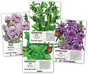 Mint Collection Plants