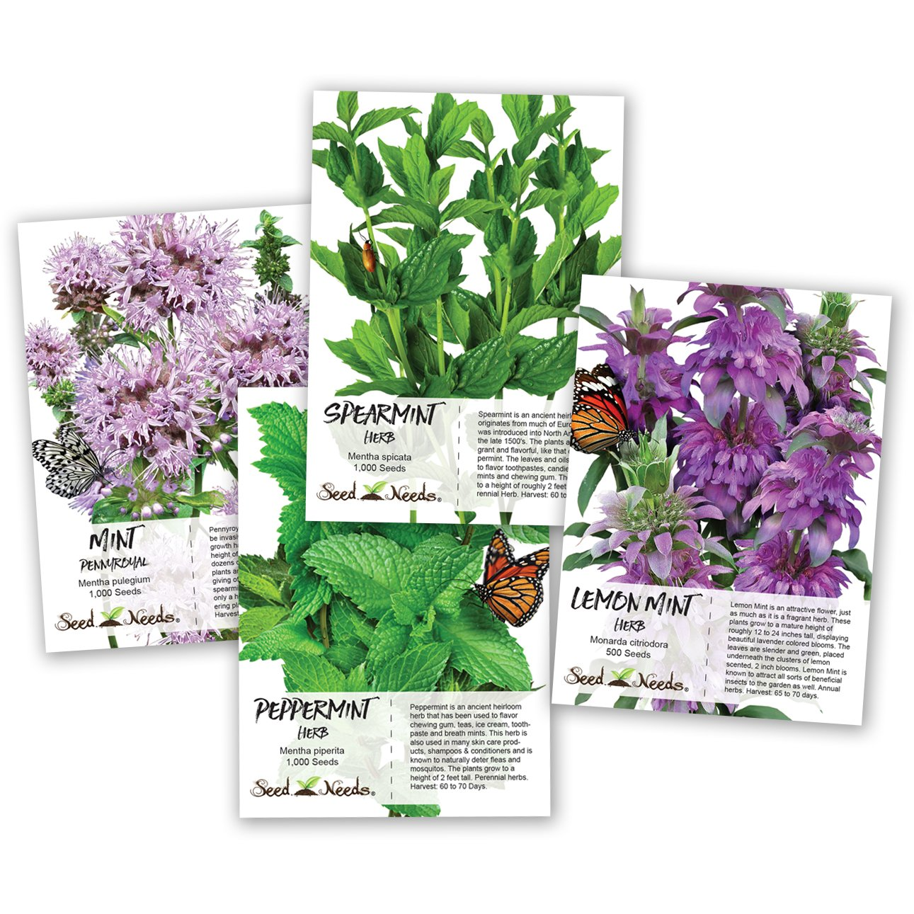 Mint Seed Collection / Seed Collection (Peppermint, Spearmint, Pennyroyal Mint & Lemon Mint) Non-GMO Seeds by Seed Needs by Seed Needs