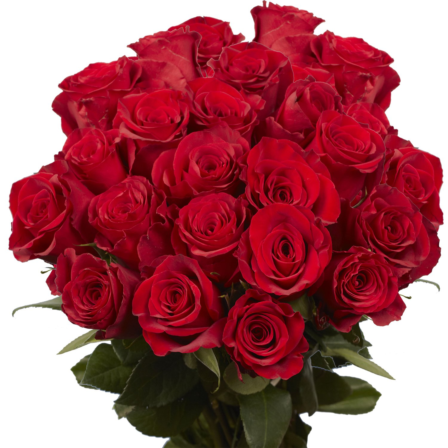 GlobalRose Red Roses- Express Flower Delivery- 50 Fresh Cut Stems by GlobalRose